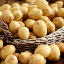 POTATOES - BULK