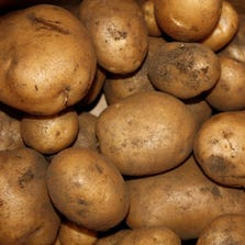 FRESH RUSSET POTATOES - BULK